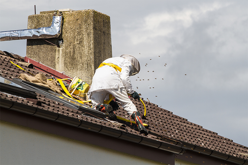 Bee Pest Control in Basildon Essex